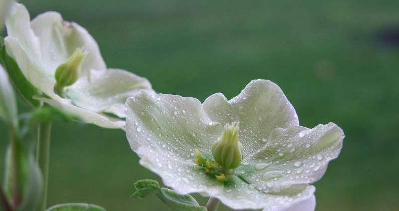 Des conseils en d coration maison et jardin les plantes qui r sistent l hiver - Plantes qui ne craignent pas le gel ...