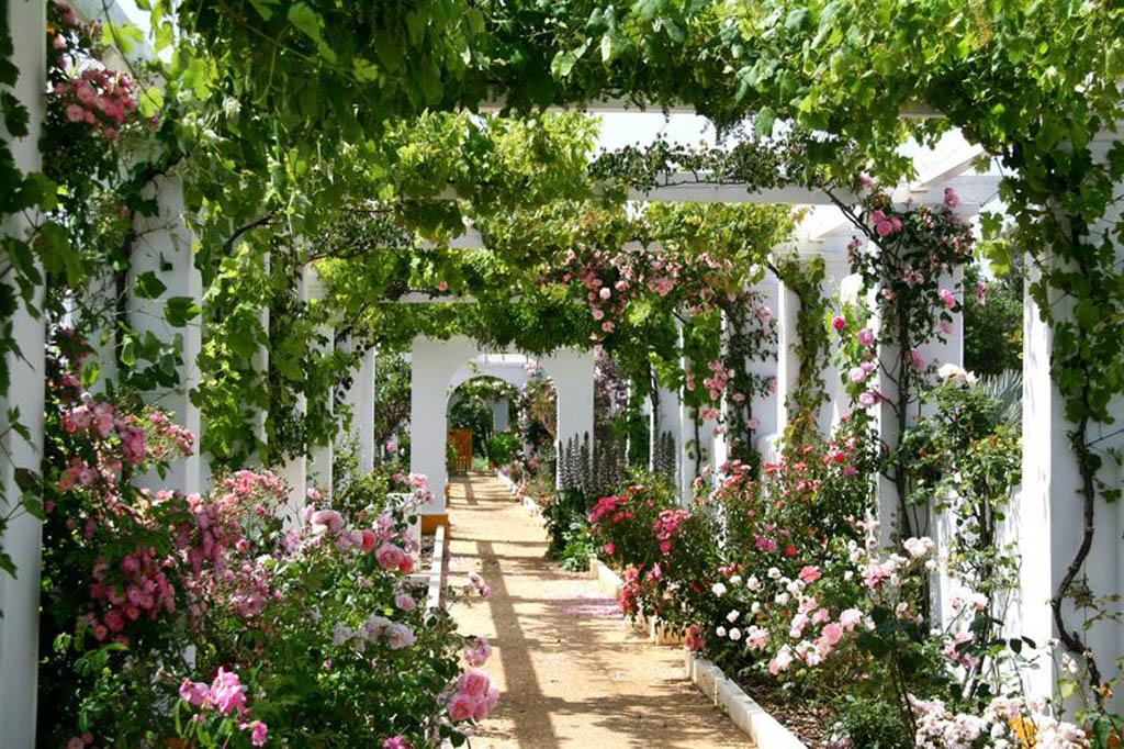 des conseils en d coration maison et jardin les plantes grimpantes dans le jardin. Black Bedroom Furniture Sets. Home Design Ideas