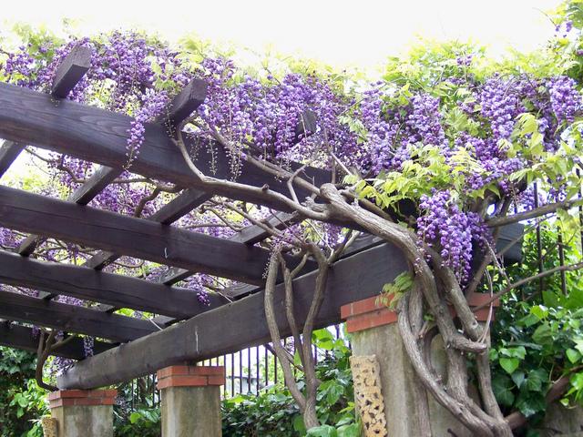 des conseils en d coration maison et jardin l art de bien utiliser les plantes grimpantes. Black Bedroom Furniture Sets. Home Design Ideas